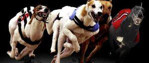 sky dogs 21 offer